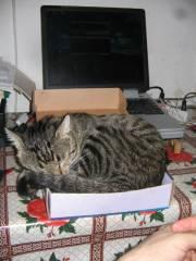 cutie şi laptop